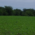 "176 Acre ""Development Tract"" Troy, MO"