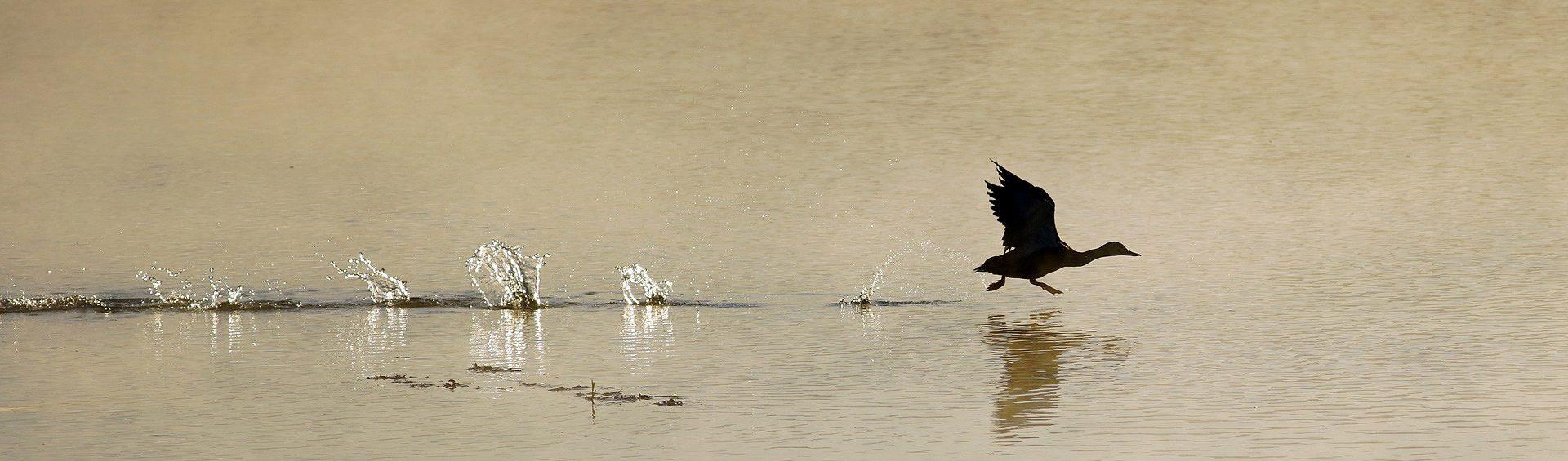 slider-duck