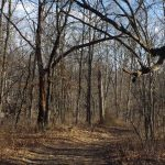 """220 Acres """"Moscow Mills"""", Lincoln County, MO"""